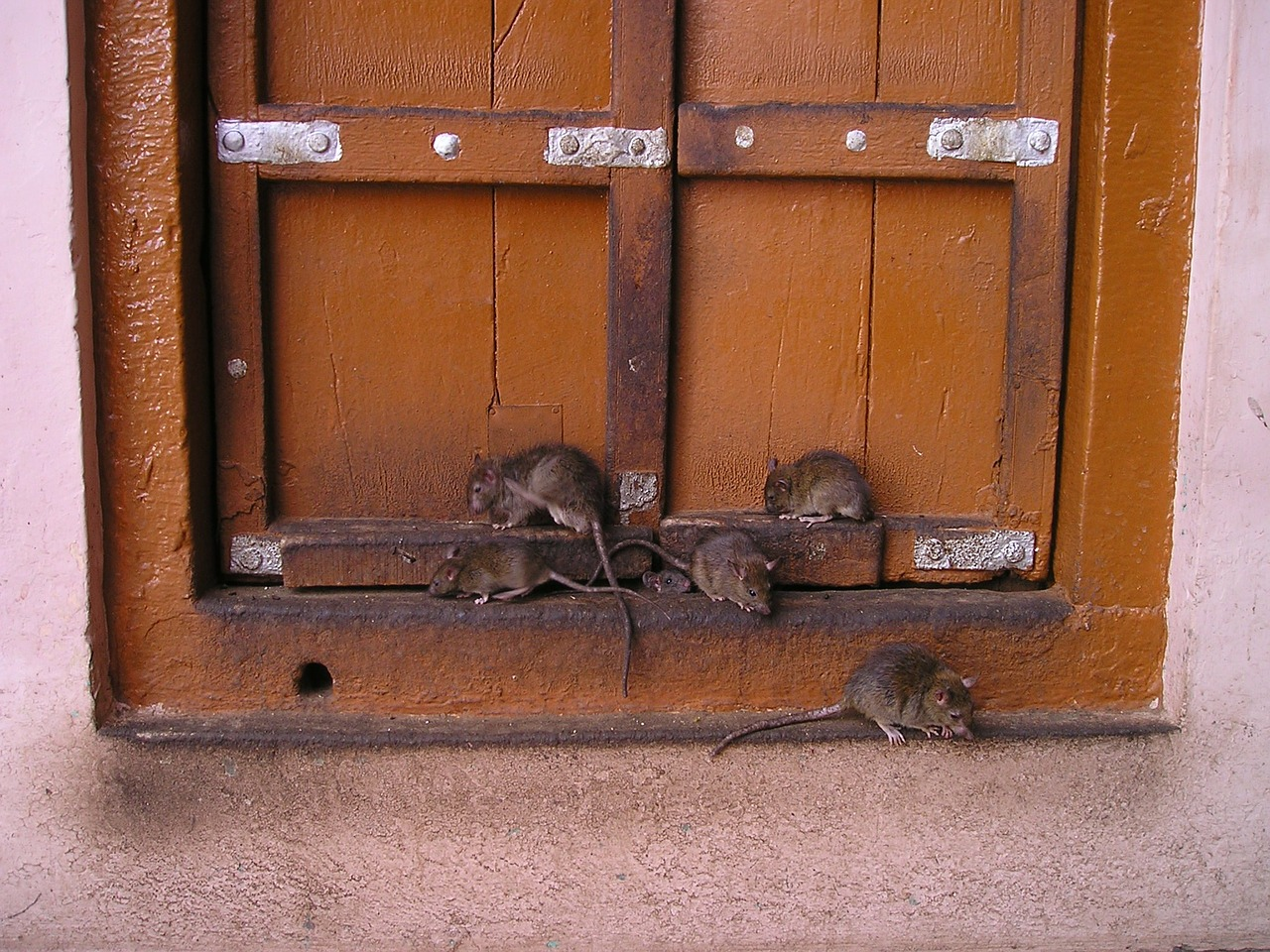 homburg einsatz gegen die ratten geht in die n chste runde saarnews. Black Bedroom Furniture Sets. Home Design Ideas