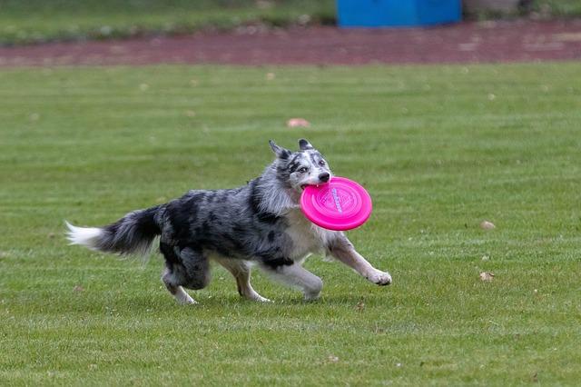 Hundesport- und Freilauffläche kommt: Weiterer Schritt zur Attraktivitätssteigerung rund um den Saaraltarm